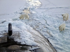 submarine-and-polar-bears